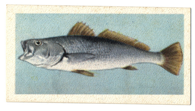 http://zululandobserver.co.za/91011/zululand-earmarked-for-major-fish-farm-industry/