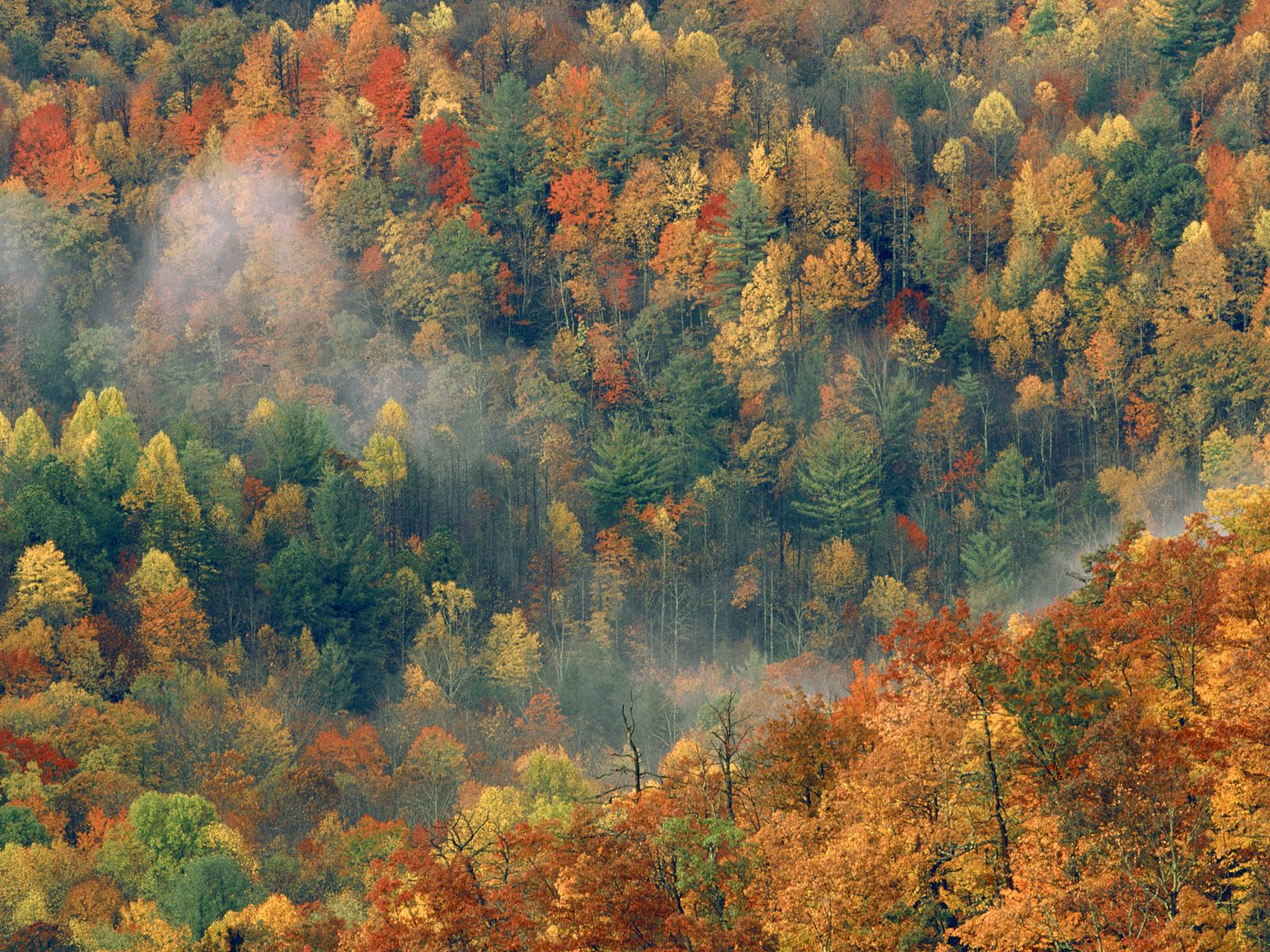 http://3.bp.blogspot.com/-4H_6BtNeZLU/T_0XXuoTvBI/AAAAAAAAHDc/-jwMmpjaW5Q/s1600/Colorful+Autumn+Forest,+Great+Smoky+National+Park,+Tennessee.jpg