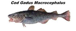 Cod Gadus Macrocephalus, o bacalhau do Pacífico