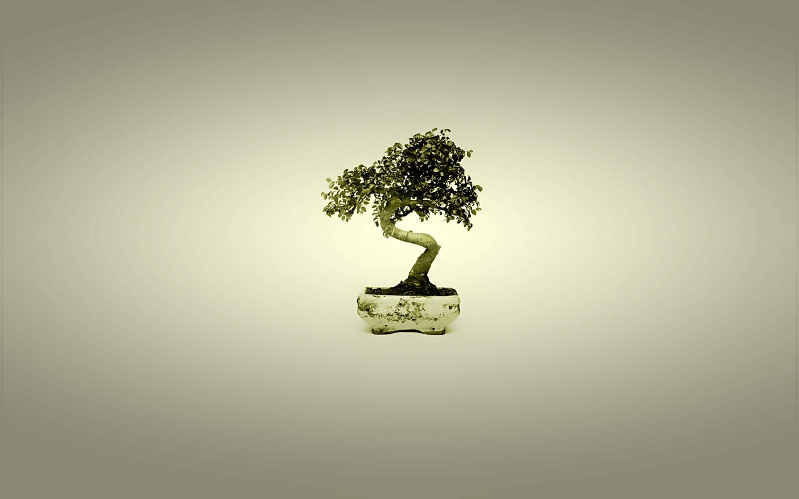 http://3.bp.blogspot.com/-4I0VHZ7qZoU/TiF0OENuzQI/AAAAAAAACLs/ZpLbTqccvOI/s1600/bonsai_japan_tree_art_wallpaper.jpg