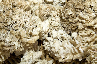 Polysaccharide in Maitake mushroom can be divided into two groups based on their structure.