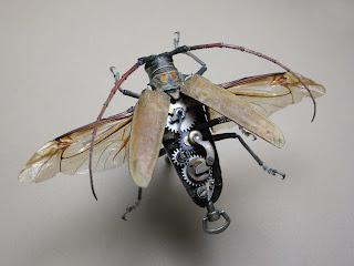 Cerambycidae: Batocera Numitor by Insect Lab