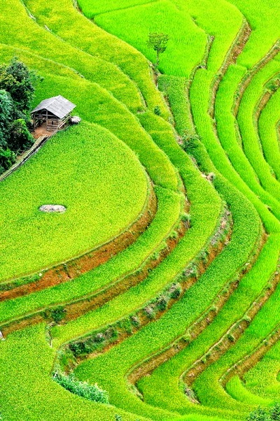 Hoang Su Phi terraced fields