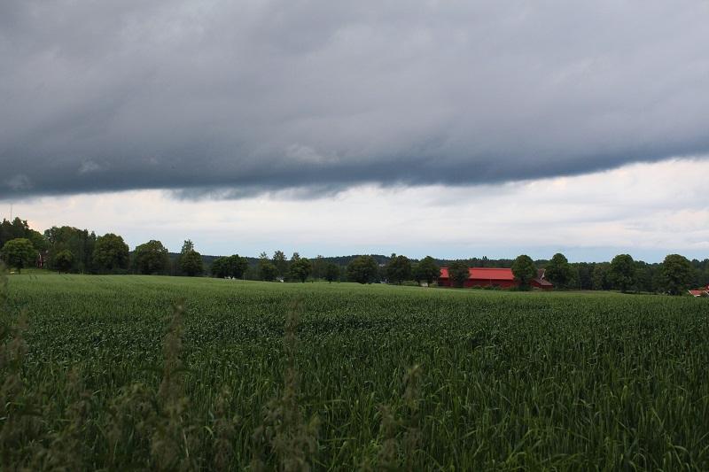 peltomaisema ruotsissa