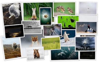 Fotografias de animales salvajes 39