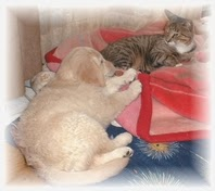 ゴールデンリトリバーと猫