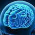 Scientists Grow Fully Functional Brain Tissue in the Lab