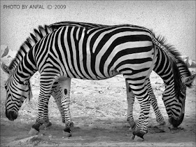 10 Foto Ilusi yang Mengagumkan