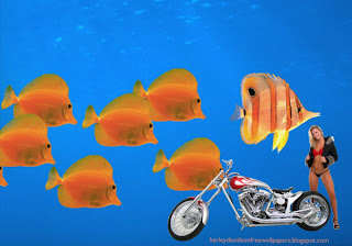 Desktop wallpapers Harley Davidson Beautiful Bikini Girl Standing near Bike at Aquarium with Fishes wallpaper