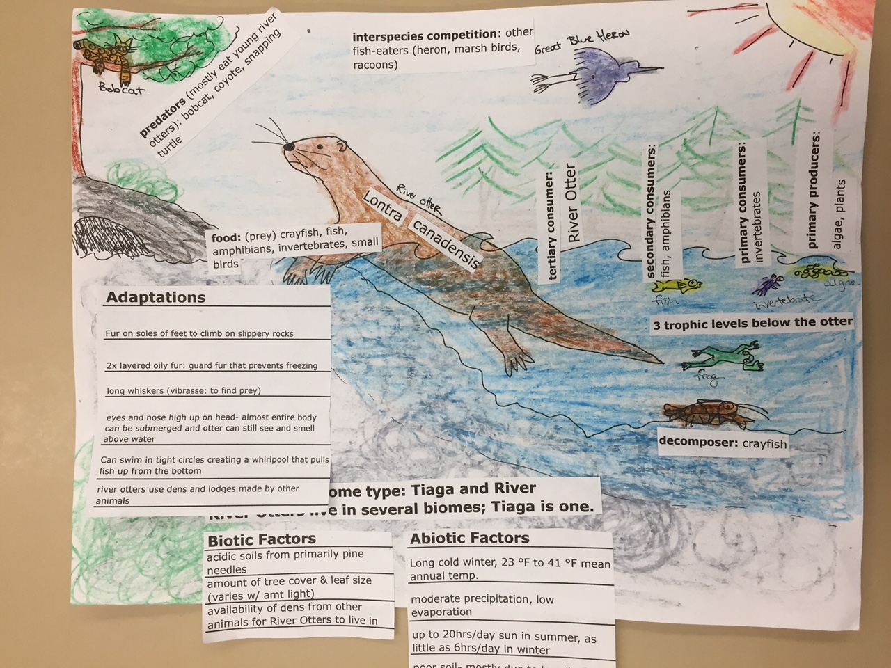 Poster design your own - To Illustrate Your Understanding Of Some Major Ideas In Ecology You Will Choose An Animal And An Ecosystem And Design A Poster
