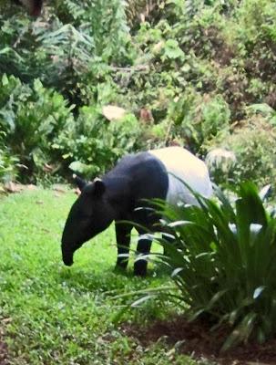 Tapir's snout