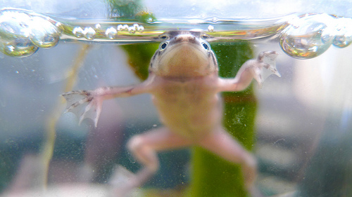 Frog O Sphere Brookstone Green Earth Almanac: H...