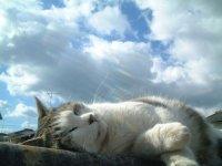 todaycat
