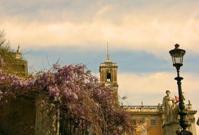 wisteria glicine campidoglio roma rome