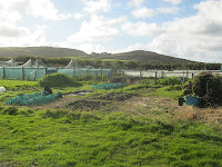 Allotment - St Ives Cornwall