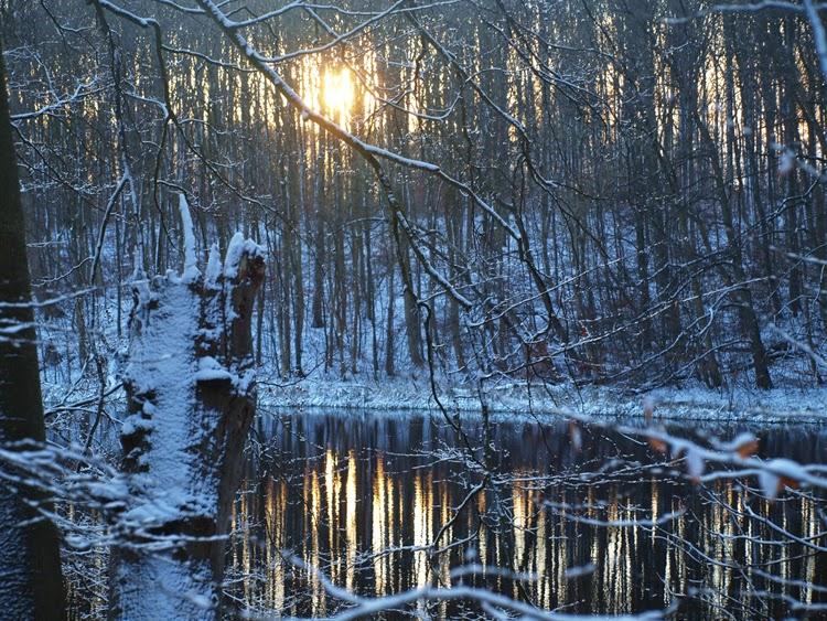 Smuk skovsø med sol og sne