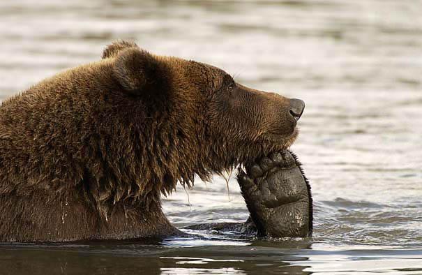 gambar beruang lucu - gambar beruang
