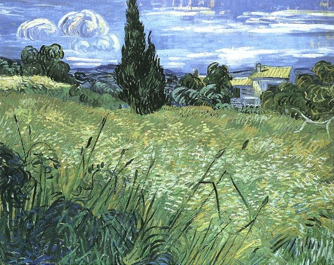 Ciprés en el trigo verde