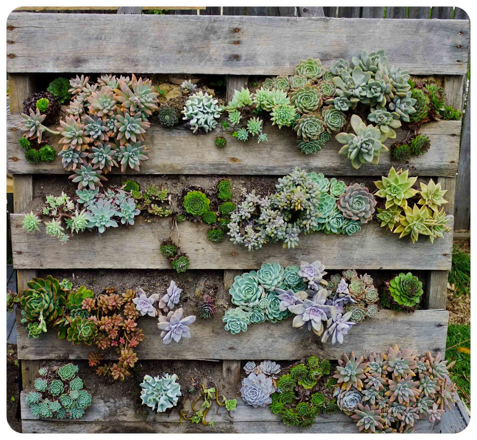 Hanging Wall Garden Diy : The urchin collective diy recycled pallet vertical