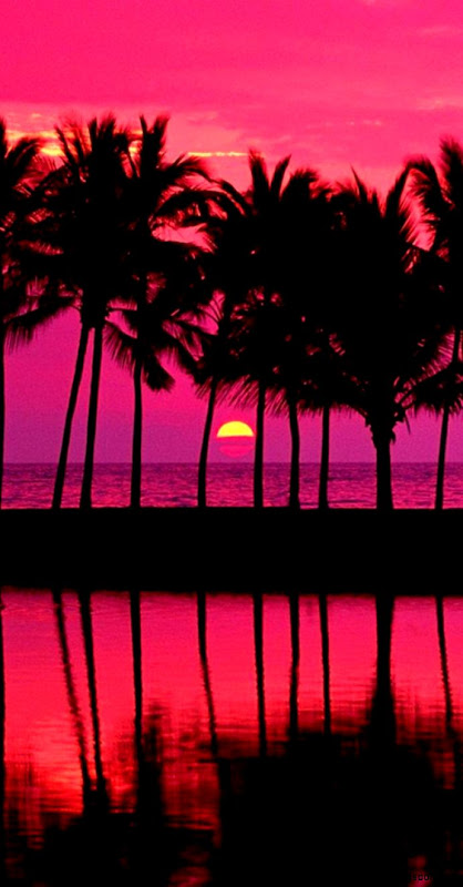 Pink Sunset With Palm Trees   The iPhone Wallpapers