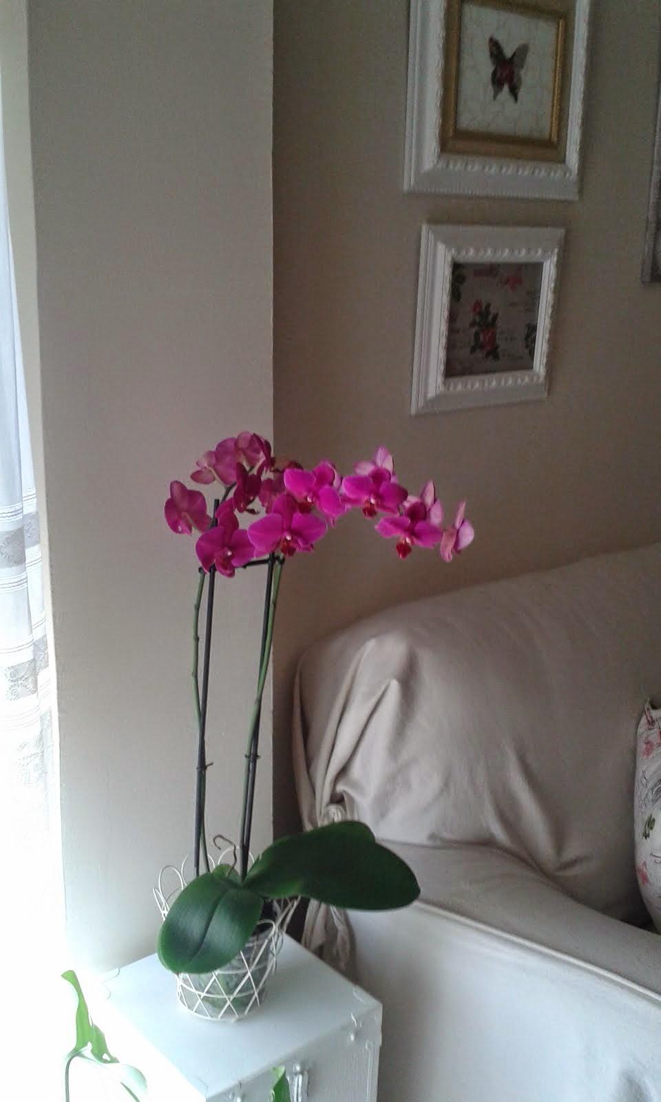 Mi orquídea