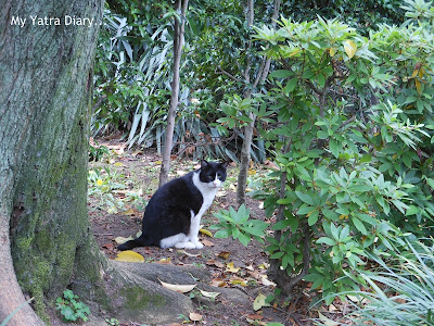 A Cat at rest at Hibiya Garden - Tokyo, Japan