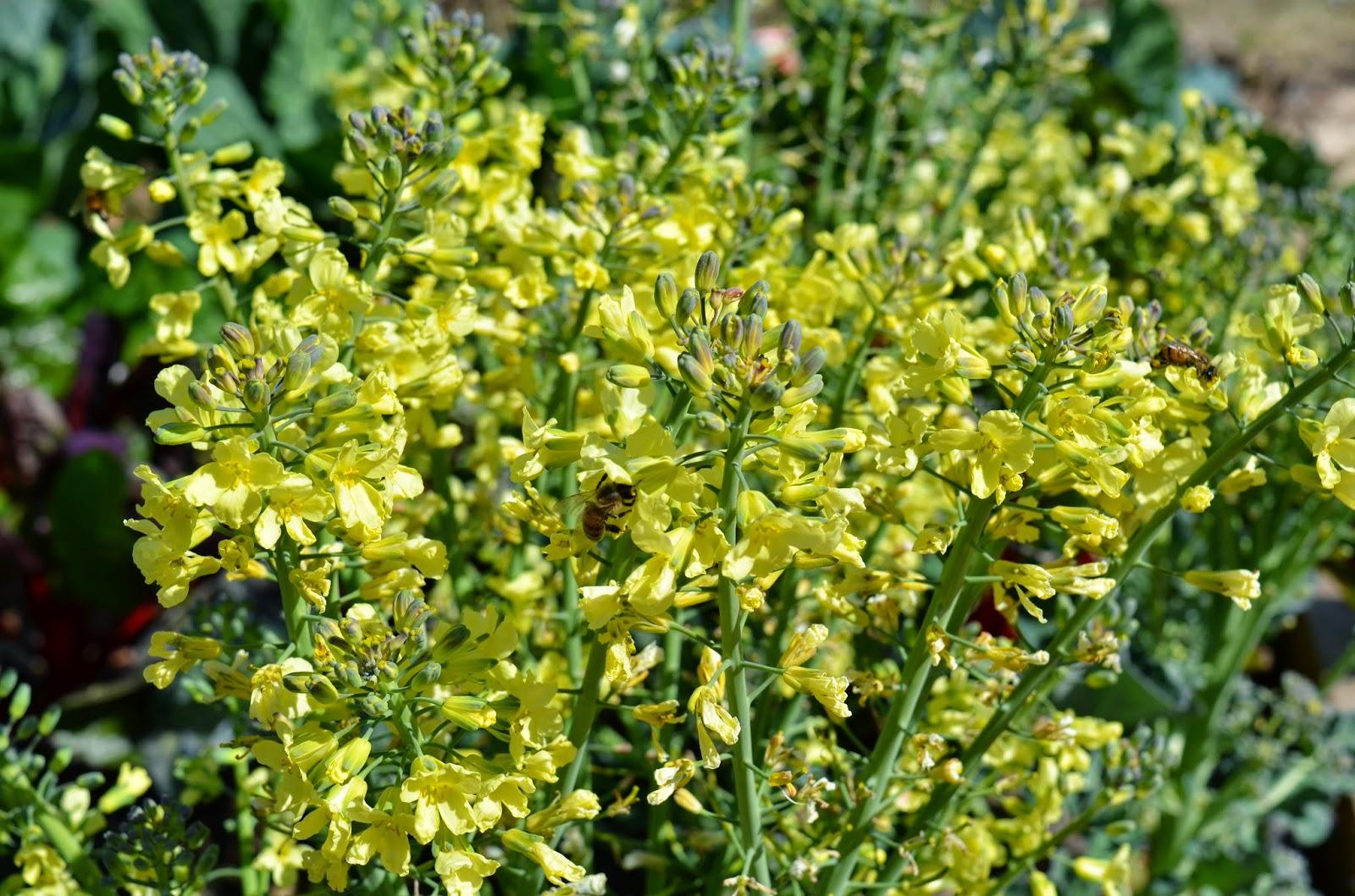 rebecca u0027s texas garden garden blogger u0027s bloom day february 2015