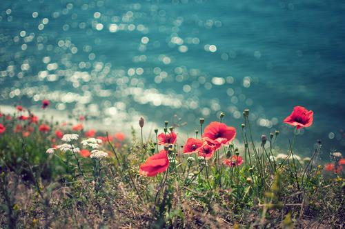 http://3.bp.blogspot.com/-4McIlcRDBNw/UTNqR0NhgwI/AAAAAAAAAM4/ZpFfYPax8QA/s1600/amapolas,flowers,nature,red,sea-95b4403bd011ad605c85d00cbe8137ee_h.jpg