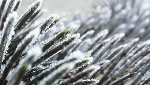 Žiemos lange