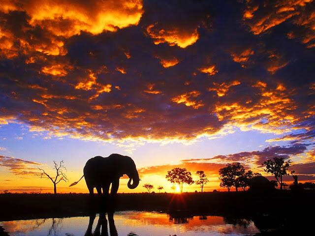 Hình ảnh con voi đẹp và hoàng hôn