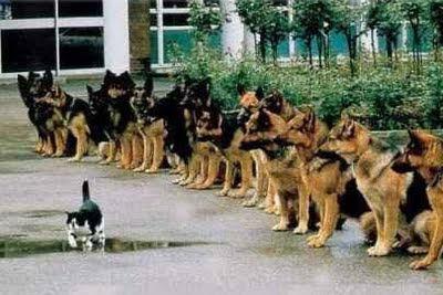 Self-discipline dogs watching a cat