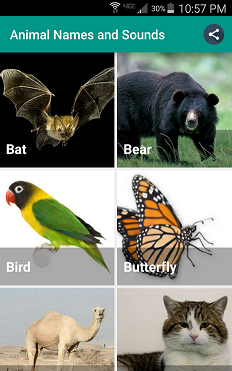 Animal Names and Sounds APplication for Kids