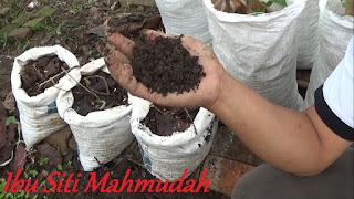 Bukti Bahwa Sampah Daun di Pekarangan dapat Menyuburkan Tanah