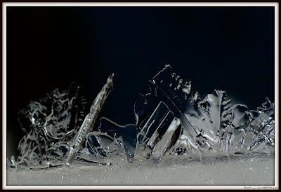FloridegheataIceflowersEisblumenFloresdehieloλουλούδια πάγο