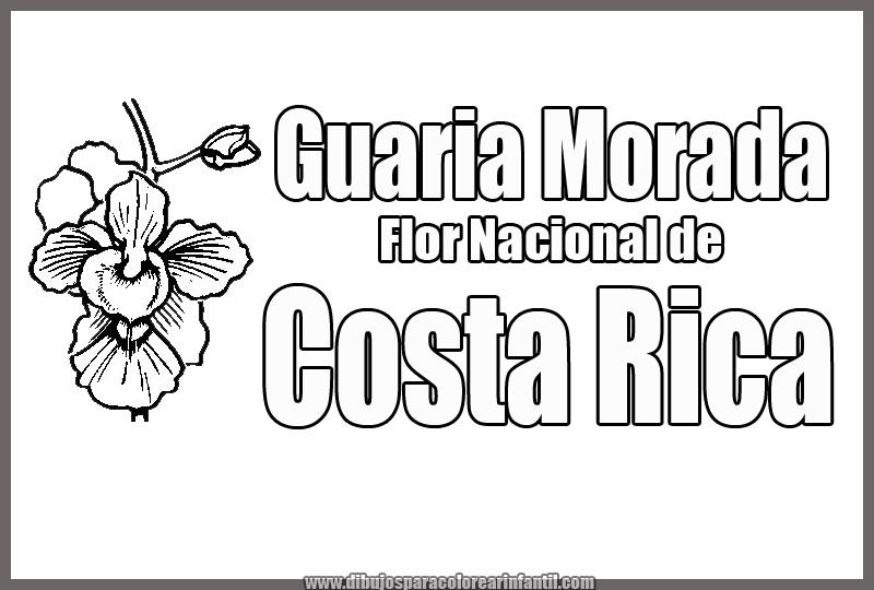 Flor Nacional de Costa Rica - Guaria Morada para colorear ...