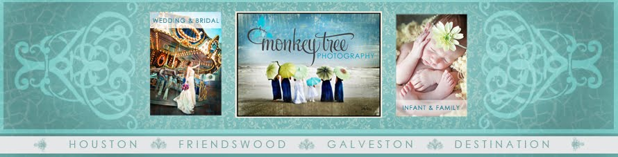 Monkey Tree Photography