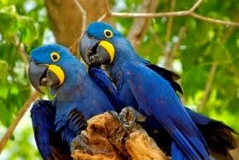 Παπαγάλοι επιστρέφουν ως δημοσιογράφοι...