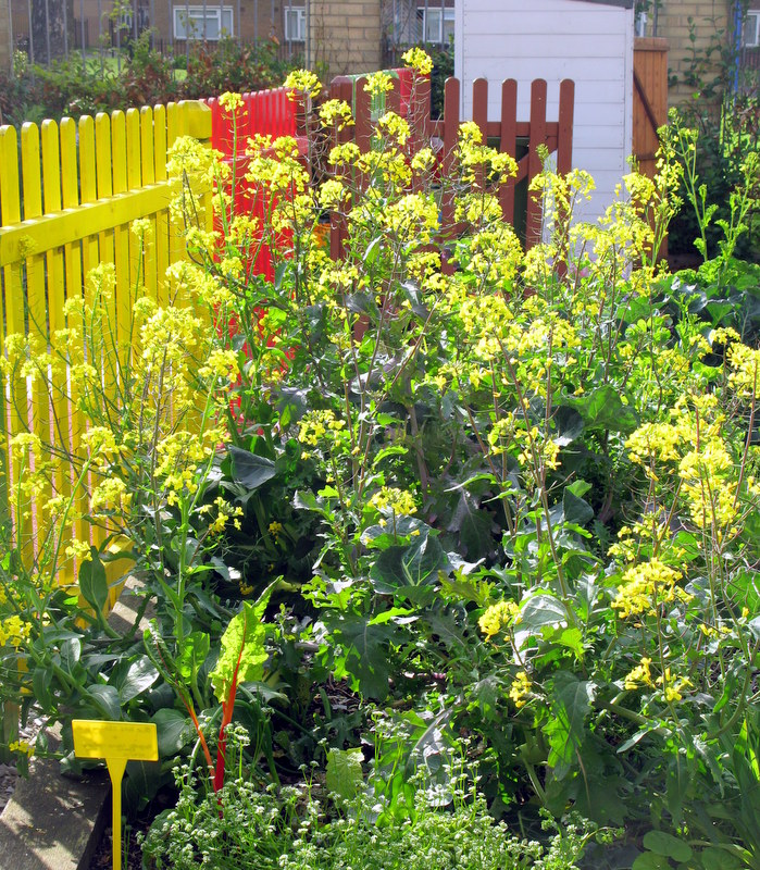 Green Flags for Vauxhall Park and Blooming Stockwell | Tradescant ...