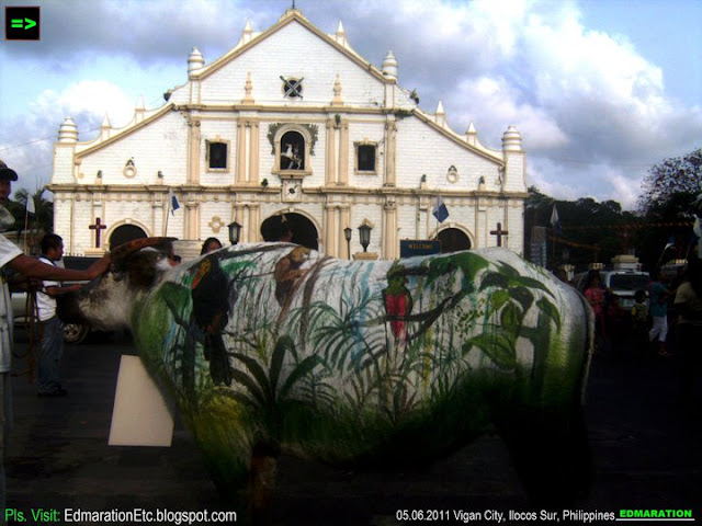 Vigan City | Carabao Painting: Karbo Festival 2011
