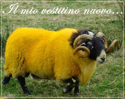 yellow-pecora.jpg