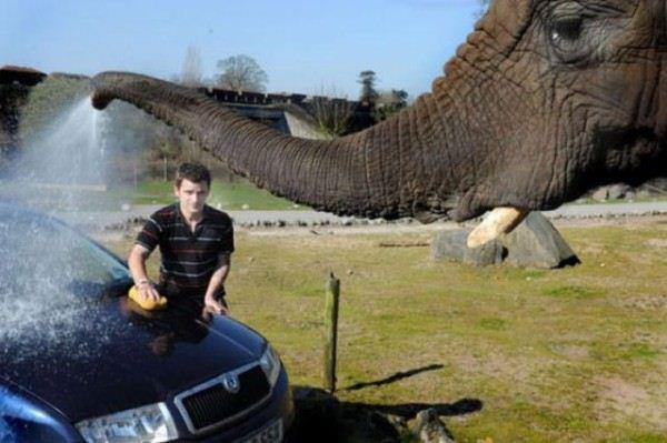 Car+Wash+Elephant