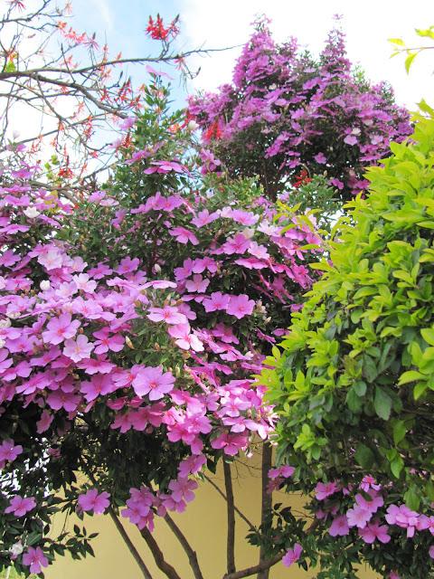 Simplesmente Fascinante~ Rua Manaca Jardim Das Flores