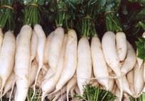 Khasiat dan manfaat buah lobak untuk kesehatan tubuh manusia