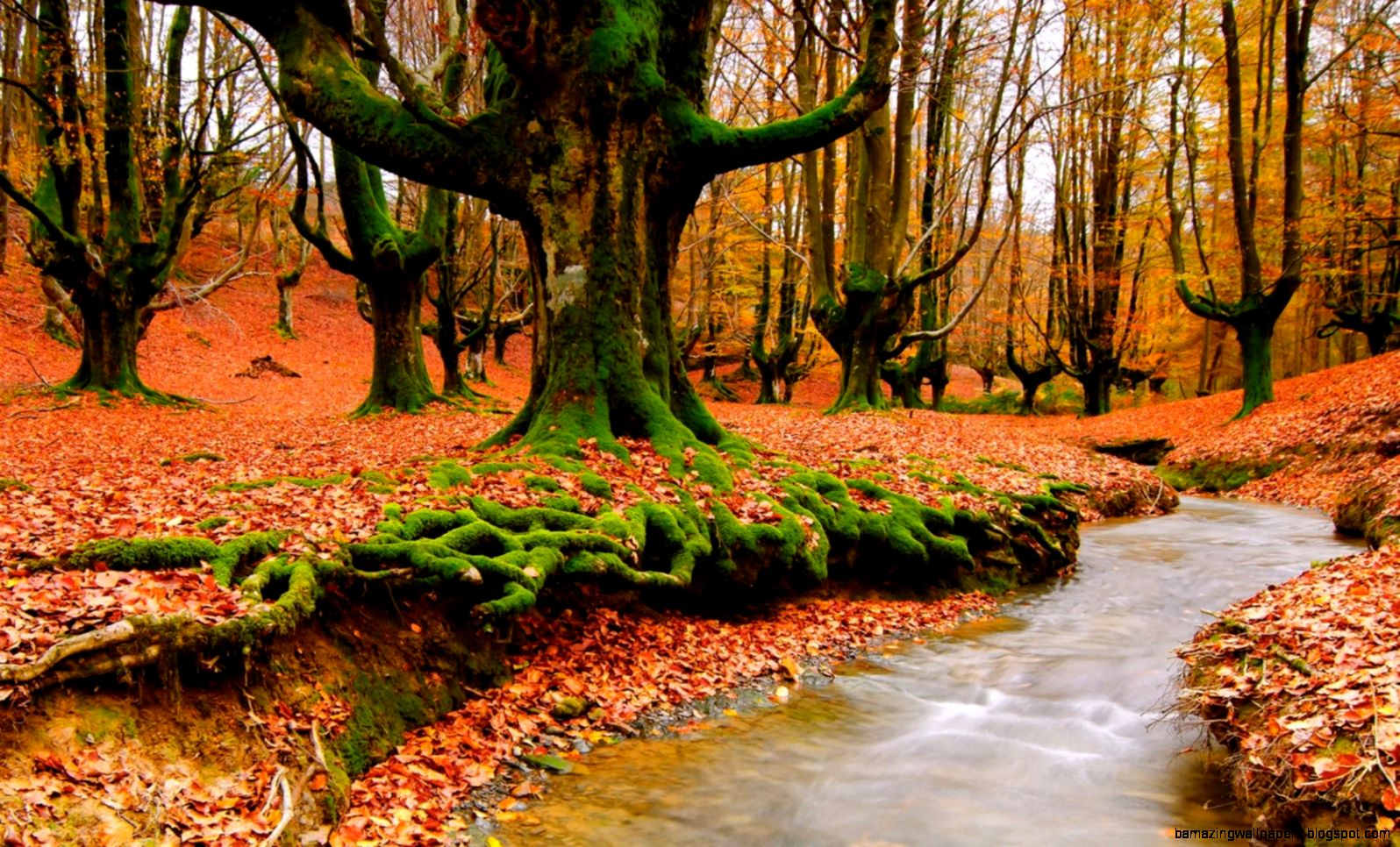 Autumn Forest Trees River Wallpaper HD Widescreen