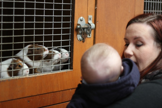 Mummy and Squidge looking at guinea pigs