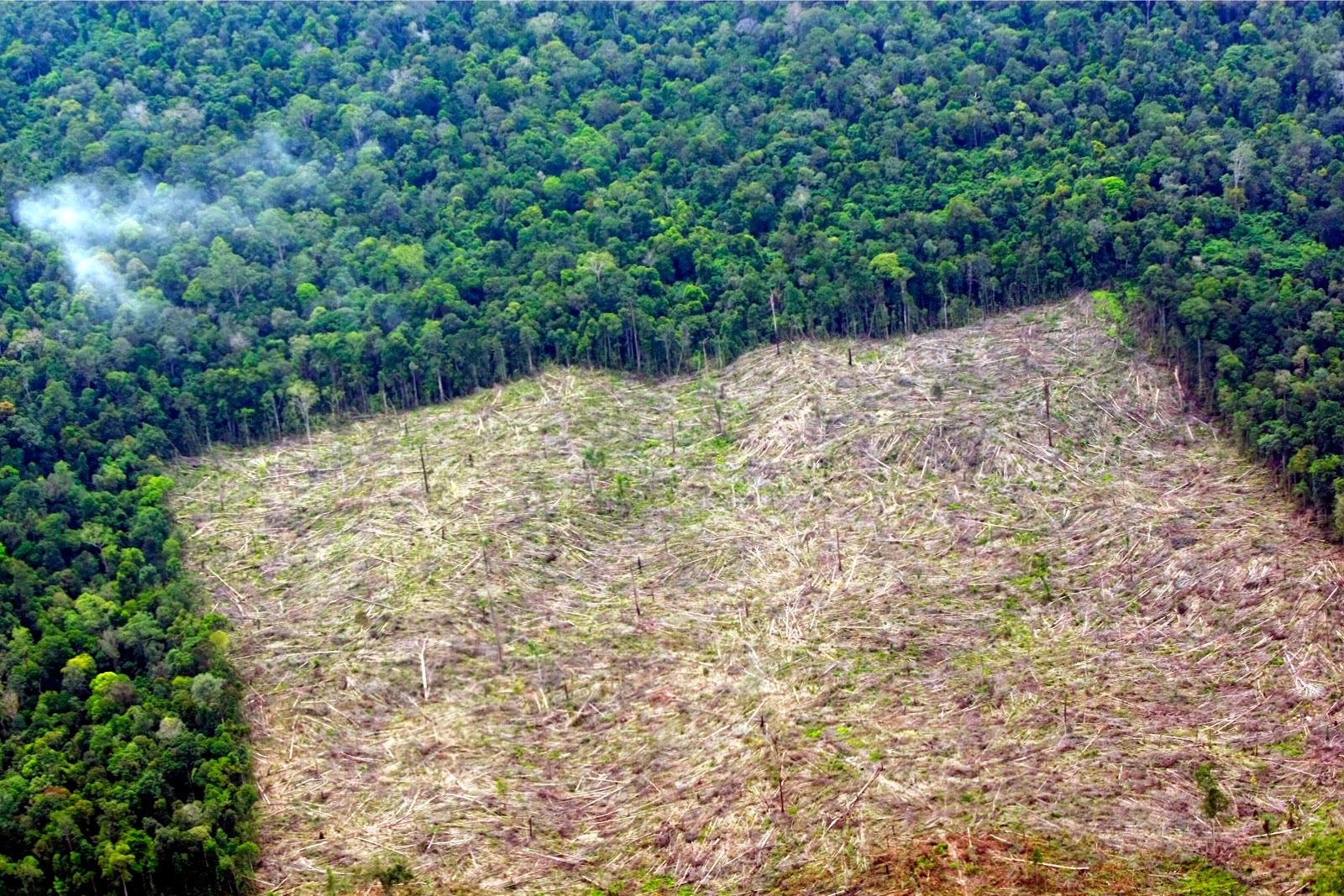 tragedy of deforestation essay