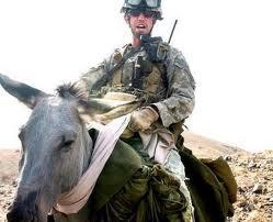keledai untuk berperang