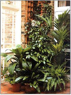 Разросшиеся в оранжерее растения можно использовать для создания вот такой живописной группы