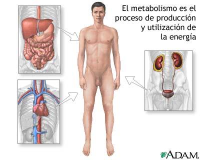 Esto dieta para eliminar grasa abdominal en mujeres dicho prrafo
