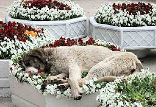 dog sleeping in flower bed